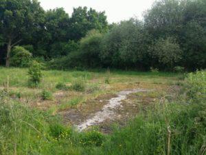Contaminated Land Surveys